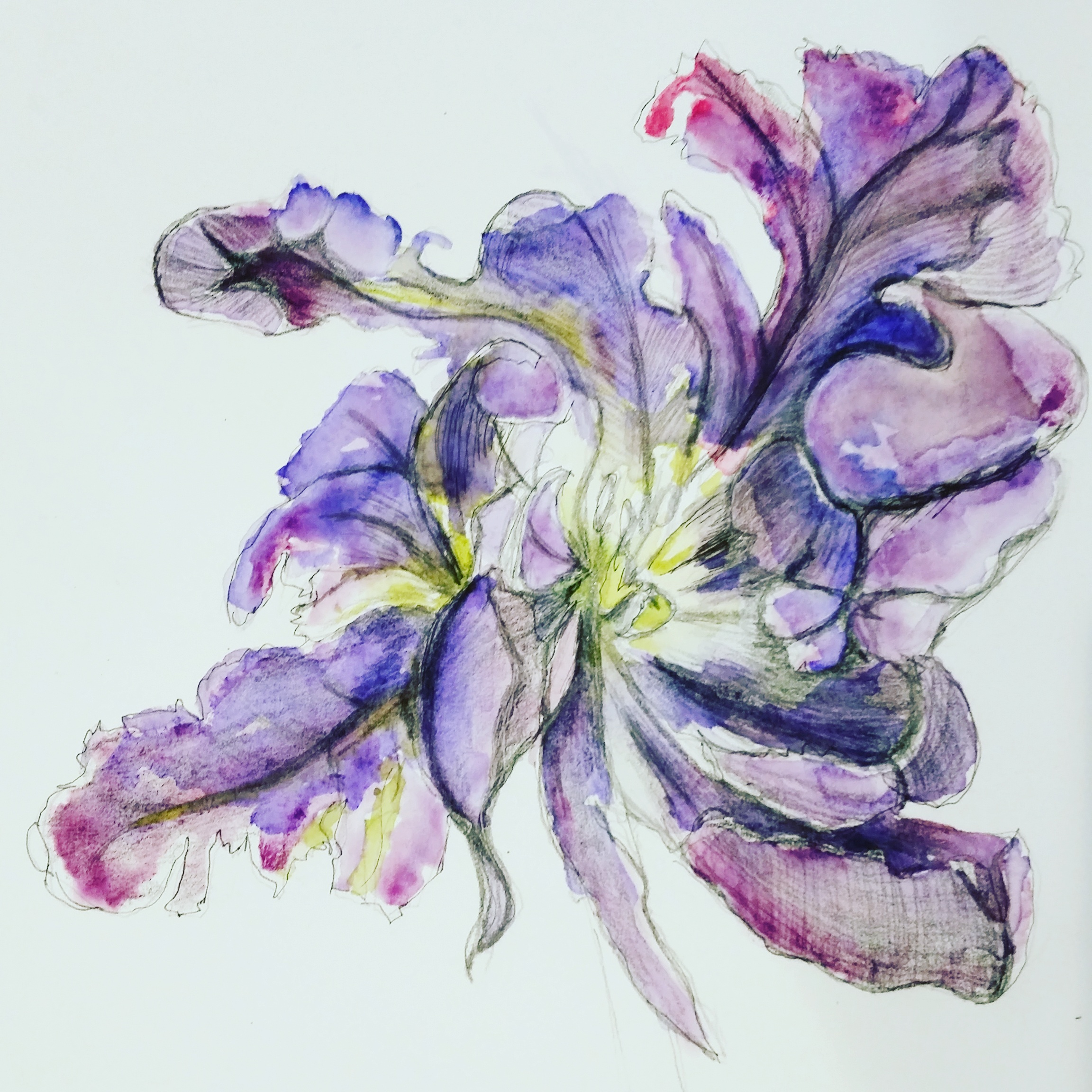 Flowers sketches using pencil and watercolor GBCStyle