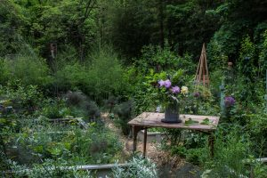 3 tips to grow flowers in your backyard garden