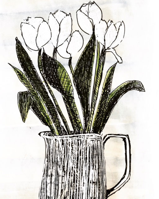 ink and watercolor sketch of white tulips in pitcher by Gloria B. Collins