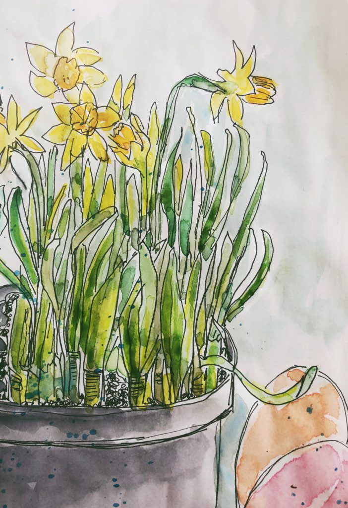 watercolor sketch of daffodils