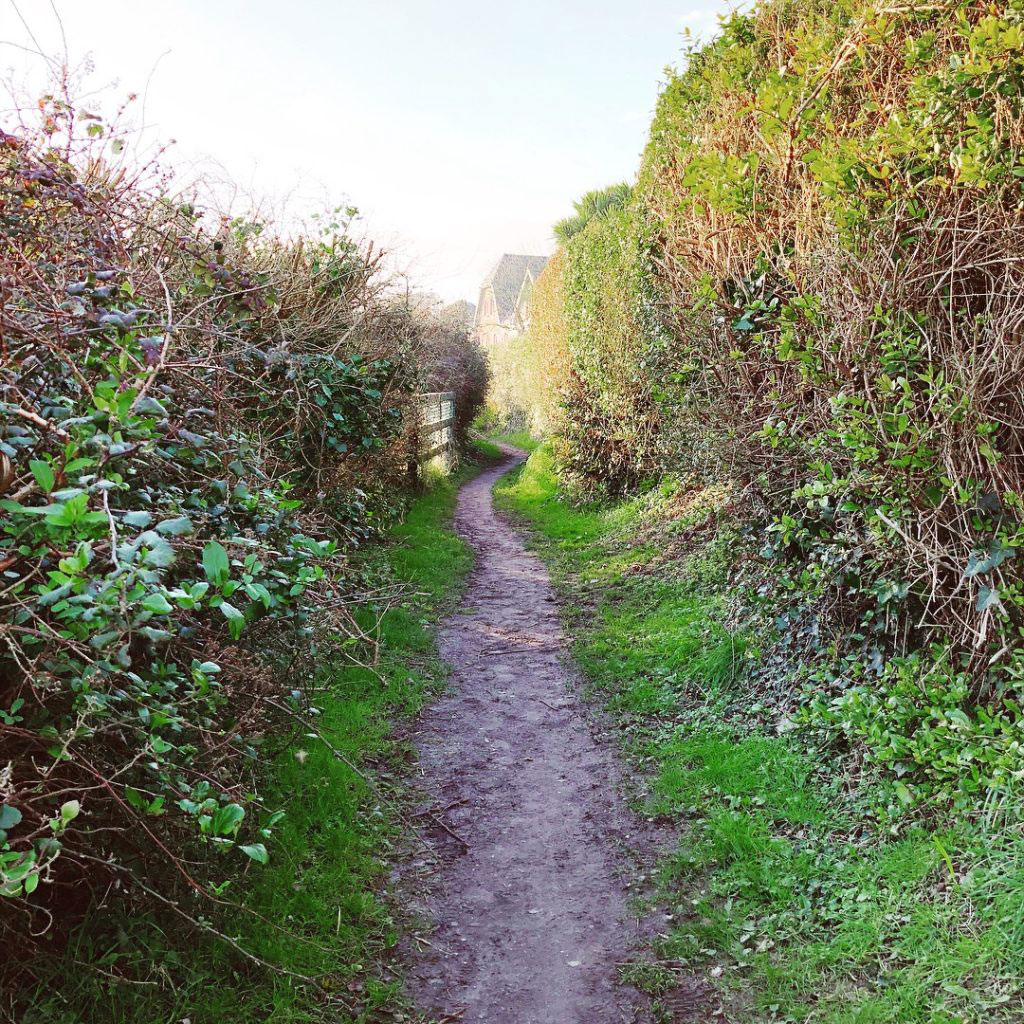 a long walk down a winding earthen path lined with tall bushes and fences