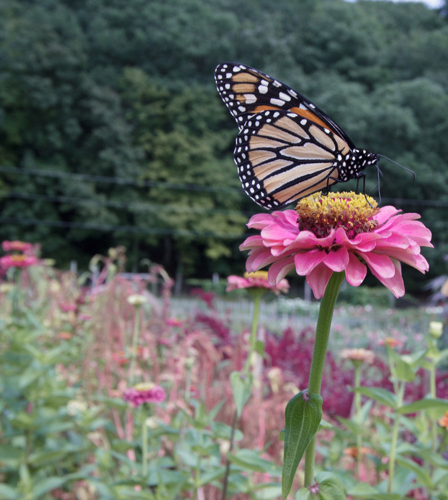 """7 Ways to Support Pollinators"" by Gloria B. Collins"
