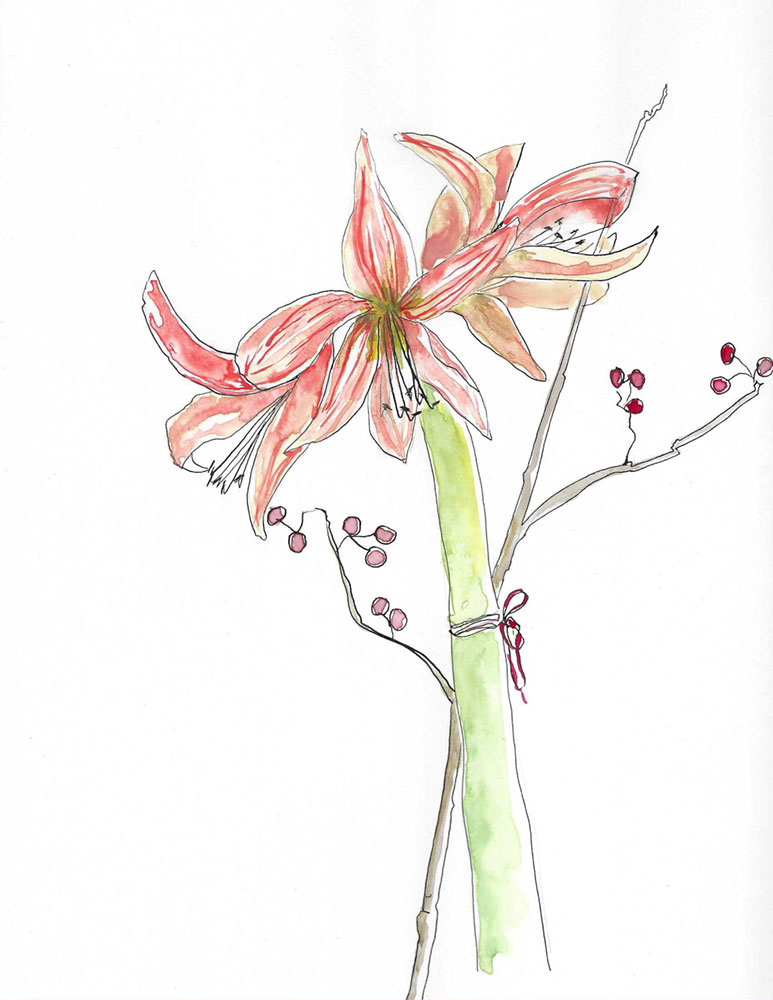 Amaryllis Sketch by Gloria B. Collins
