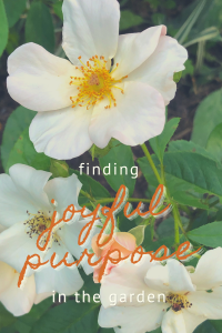 Finding Joyful Purpose in the Garden | Gloria B. Collins