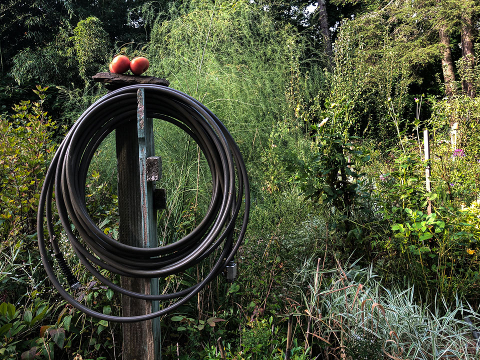 Tips for a Sustainable Garden | Gloria B. Collins